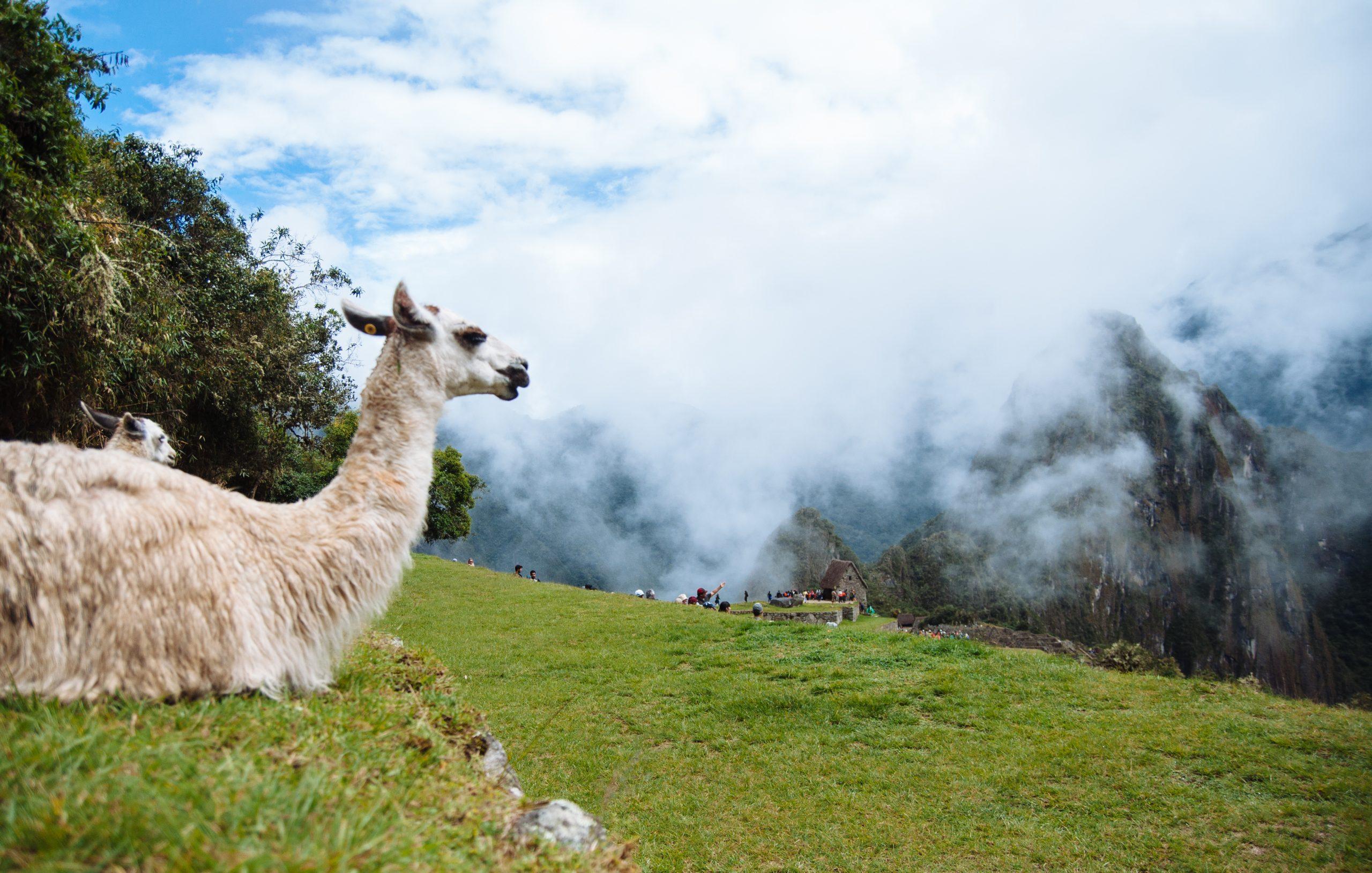Huayna Picchu, Peru (Credit: Colin Roohan)