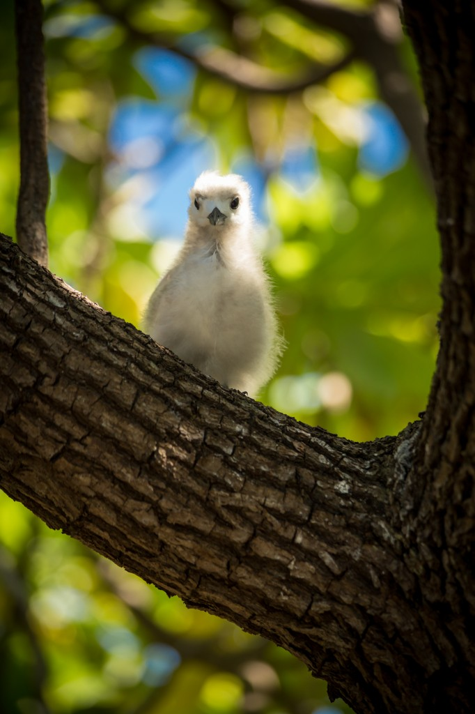 Bird Island, Tikehau