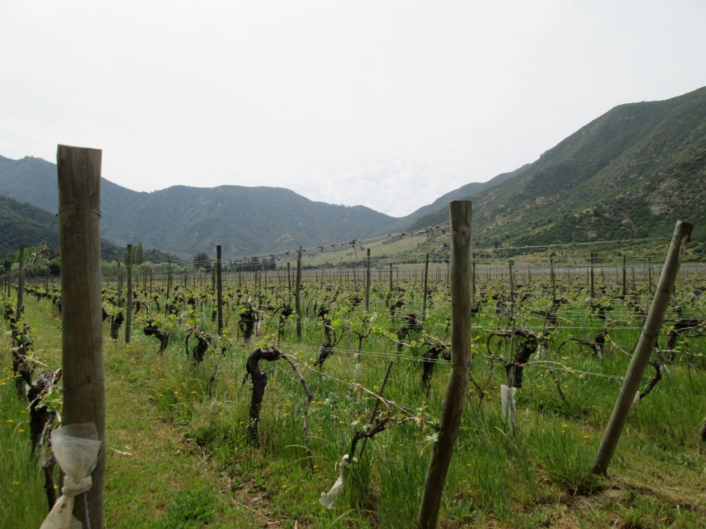 Old Vines at Neyen Winery