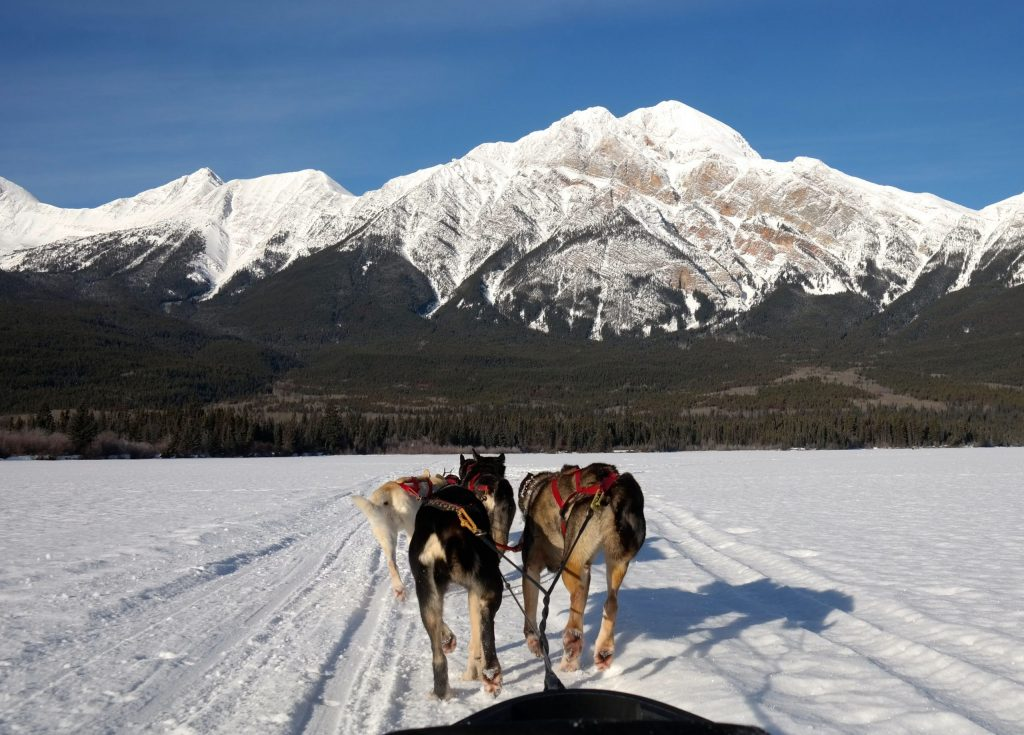 Dog Sledding on Collette's Canada's Winter Wonderland