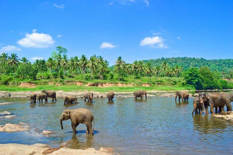 Sri Lanka (Credit: Trafalgar)