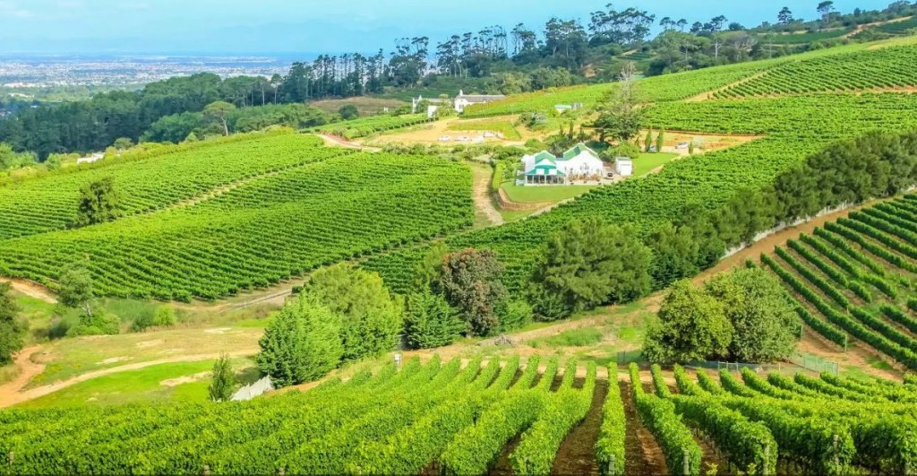 cape vinyards