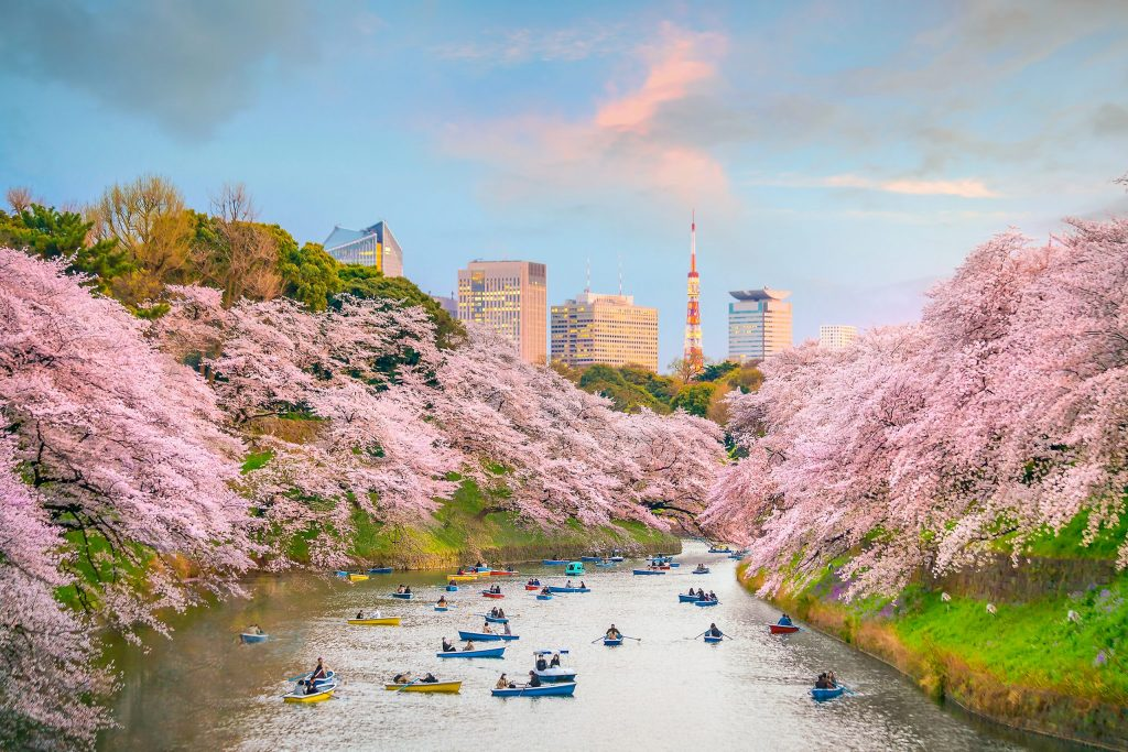 credit go-today- shutterstock_1017749740-cherry-blossom-river
