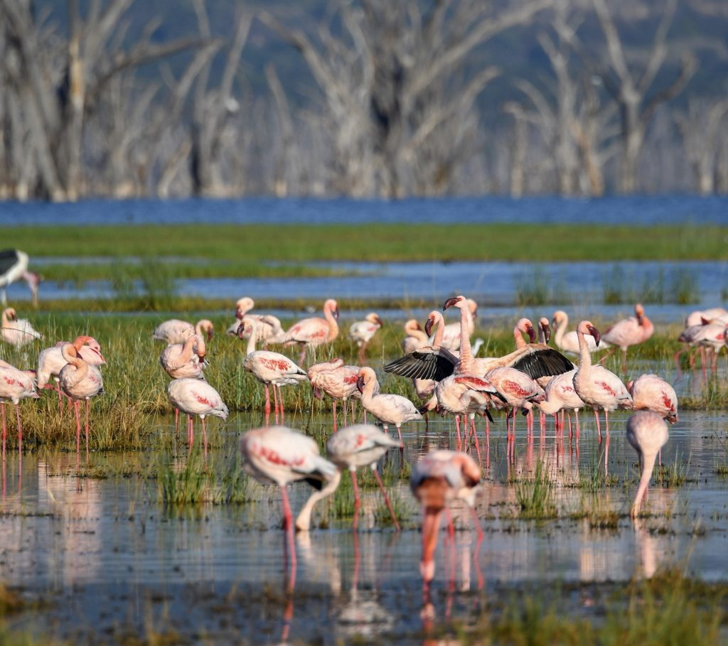 1. Lake Nakuru is home to more than a million flamingos