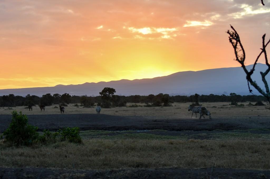 2. Spectacular sunrise over Mount Kenya in Ol Pejeta