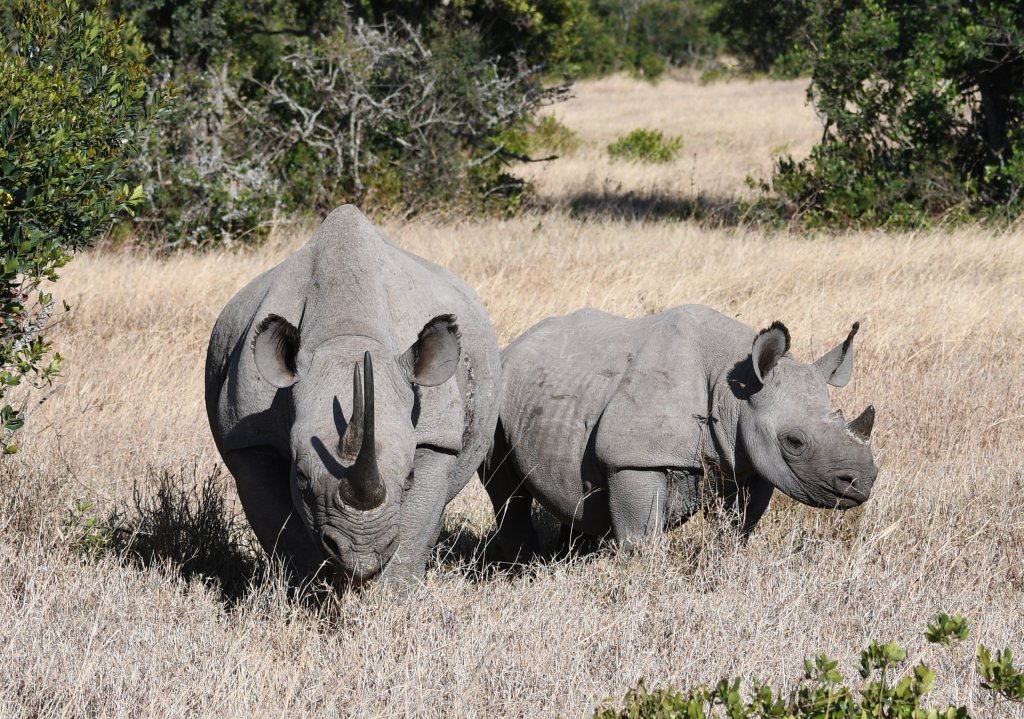 8. Ol Pejeta is the largest black rhino sanctuary in east Africa