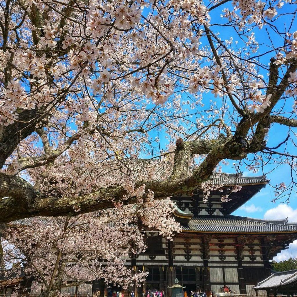 Todaiji Temple in Nara, photo credit: @orslnsight
