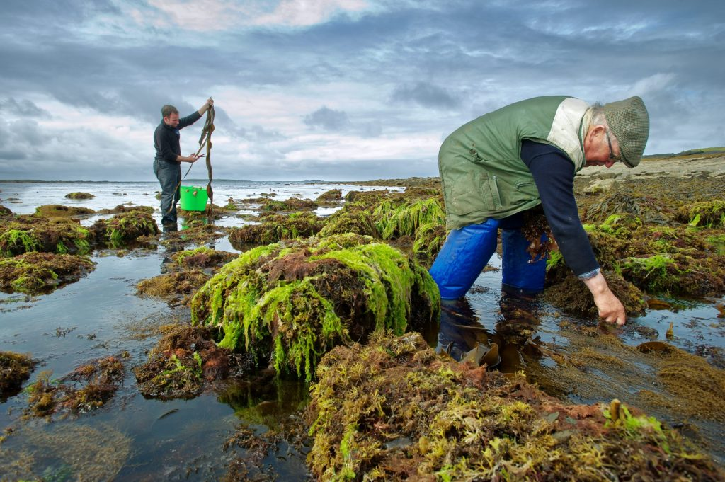 Wild Irish Sea Veg PR Photographs