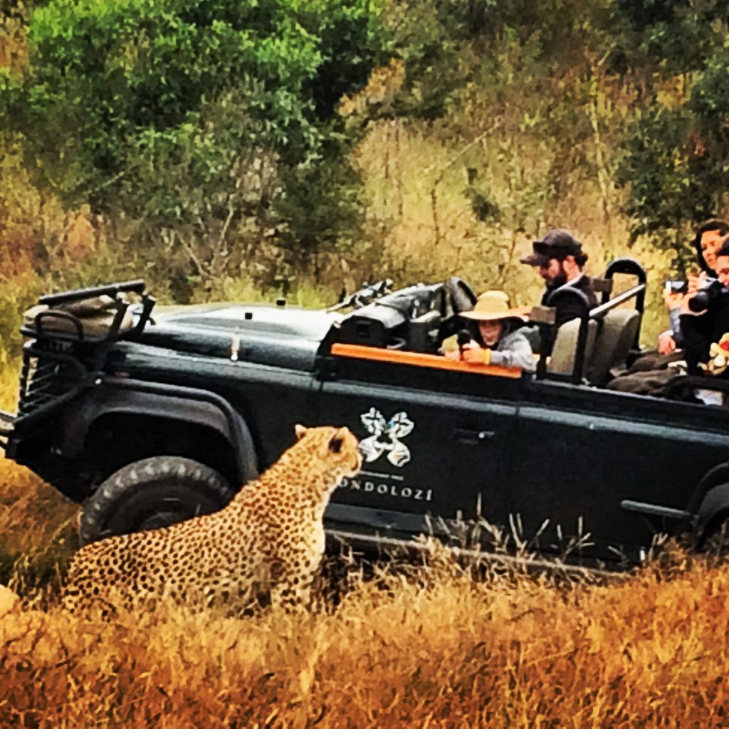 """Getting close to the """"locals"""" at Sabi Sands Game Reserve"""