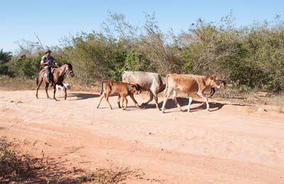 One of many ranch scenes in Chapada Diamantina