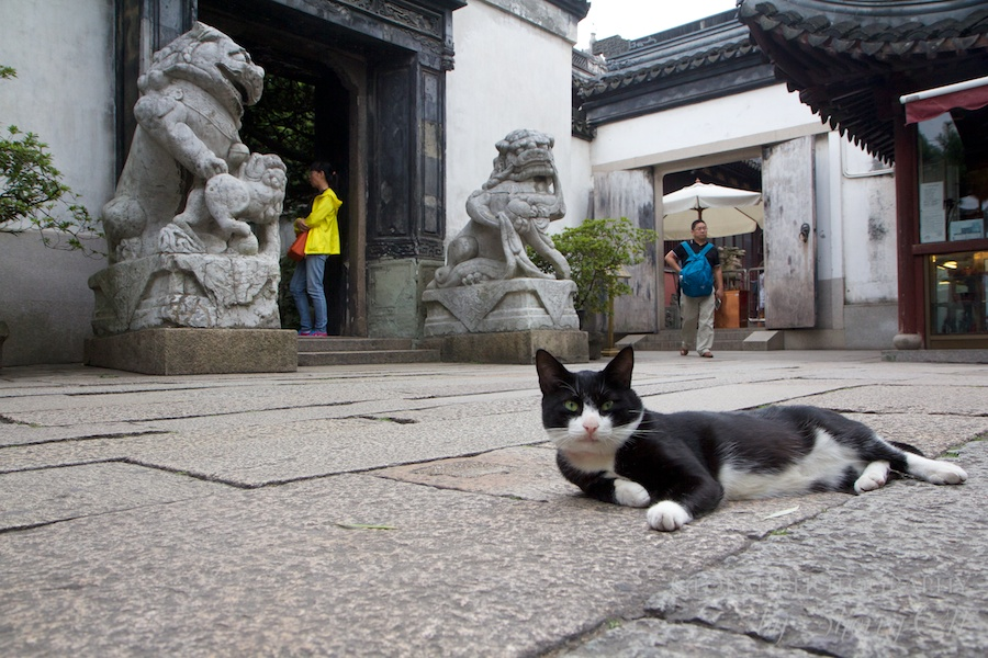 And of course don't forget the 5th pillar of a Chinese Garden…the garden cat