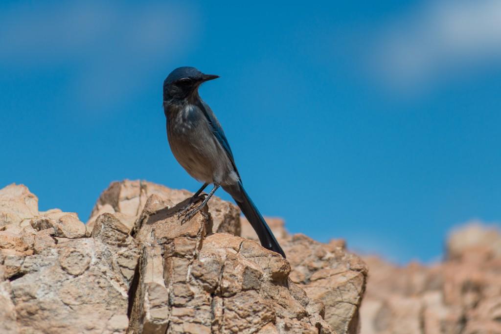 Wildlife on Go Ahead's U.S. National Parks Tour (credit: Flash Parker)