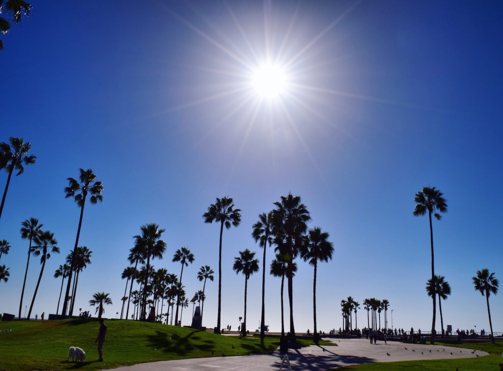 Venice Beach with Contiki by Megan Murphy