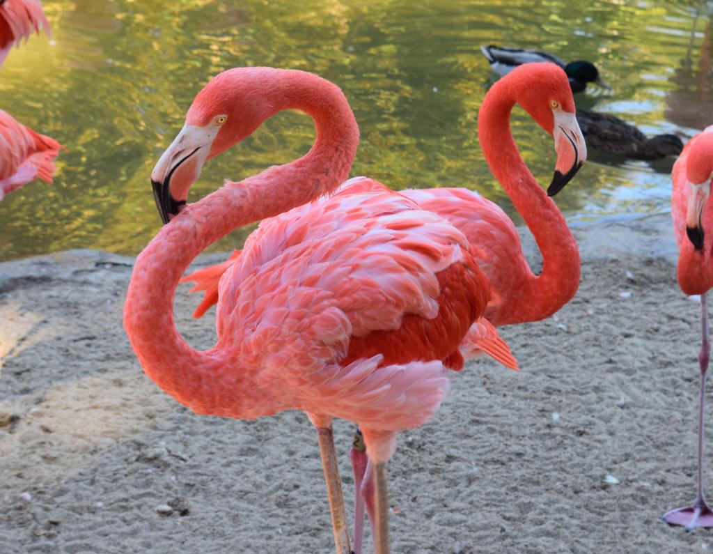 Flamingos by Megan Murphy with Contiki