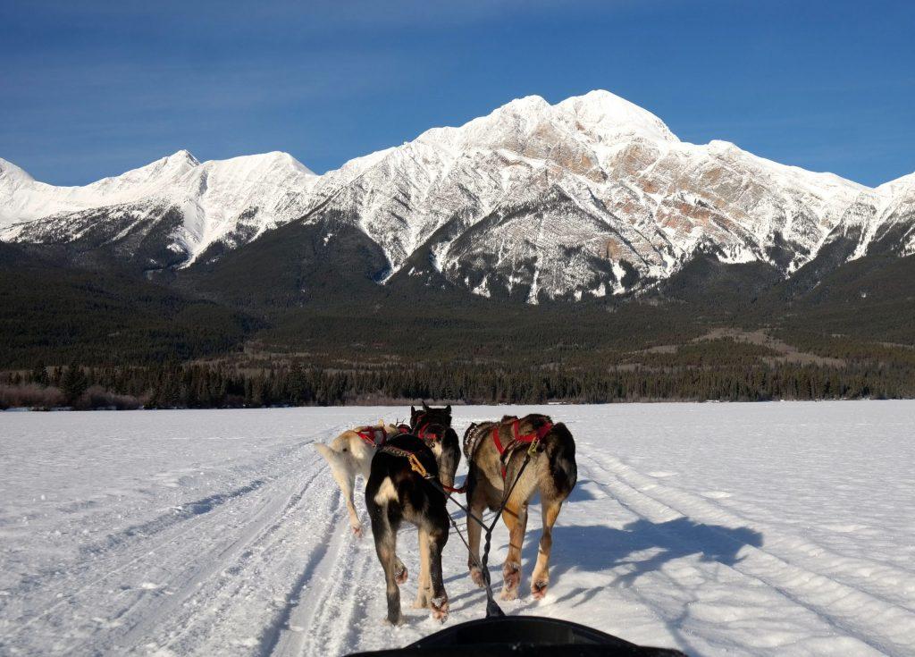 Dog Sledding on Collette's Canada's Winter Wonderland