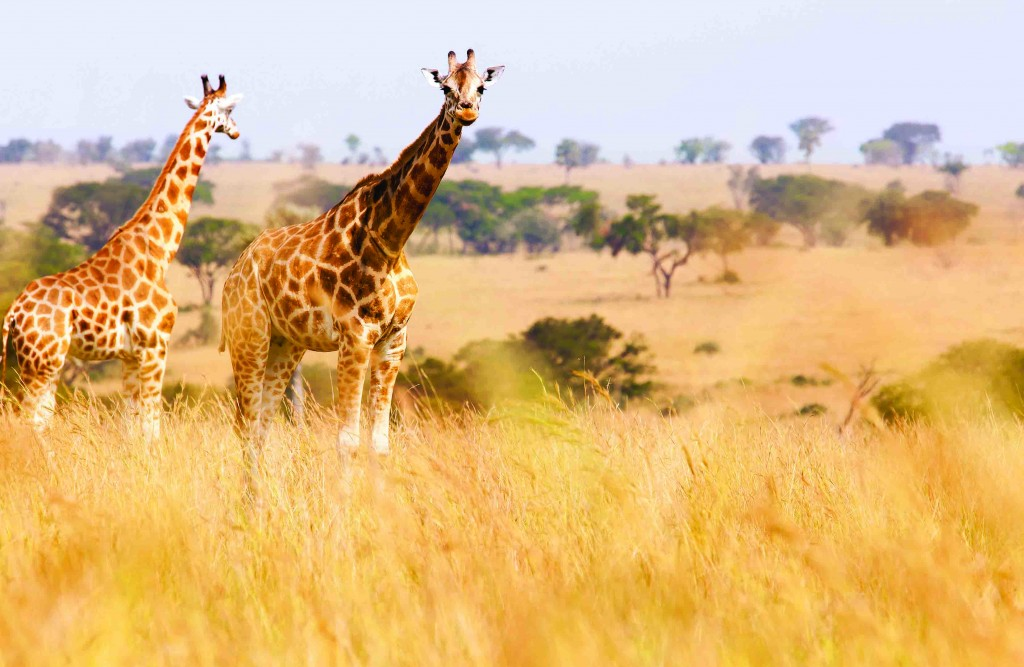 South Africa Tours - Adventure by Disney