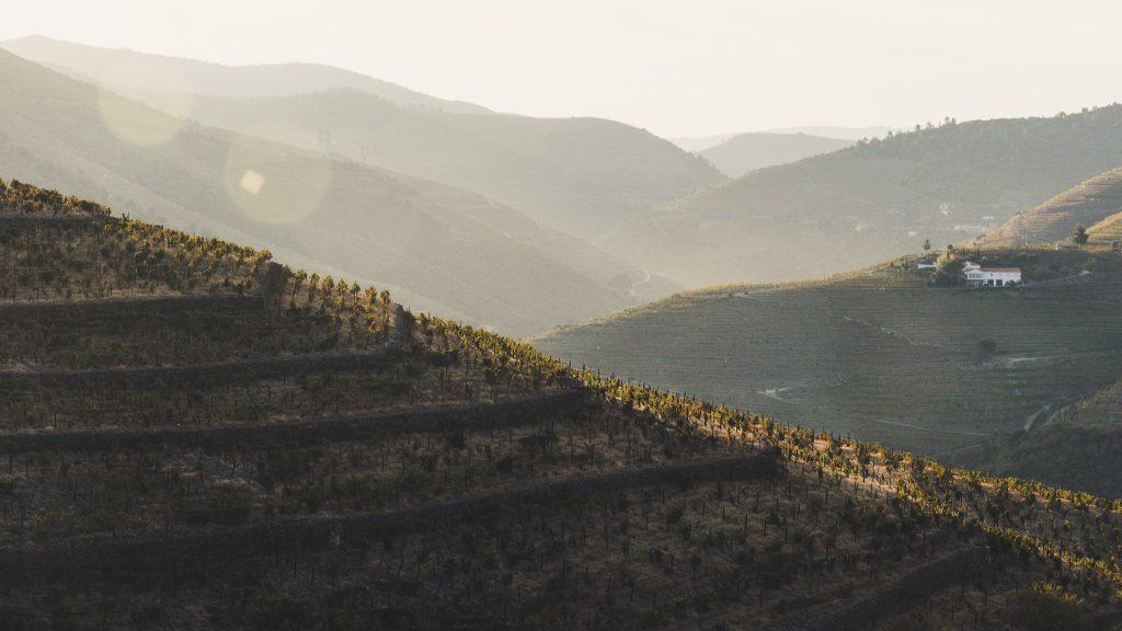 Portugal - Quinta Nova 2