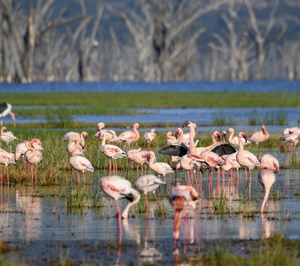 1. Lake Nakuru is home to more than a million flamingos