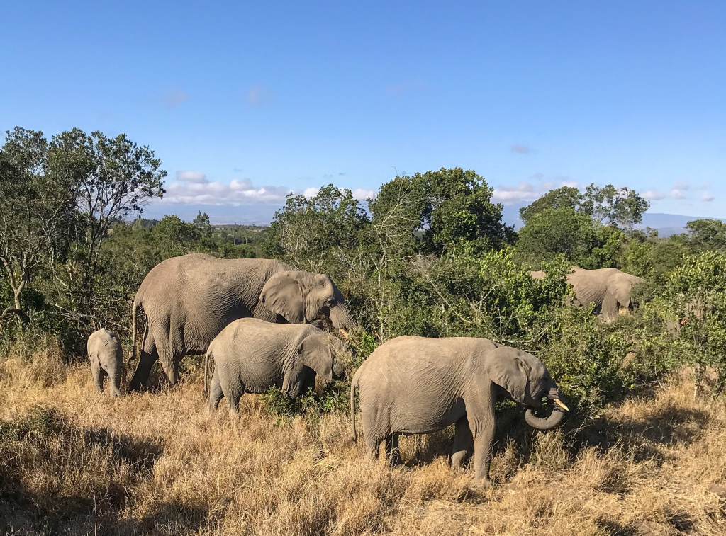 3. Family of African elephants, the largest land mammals on earth