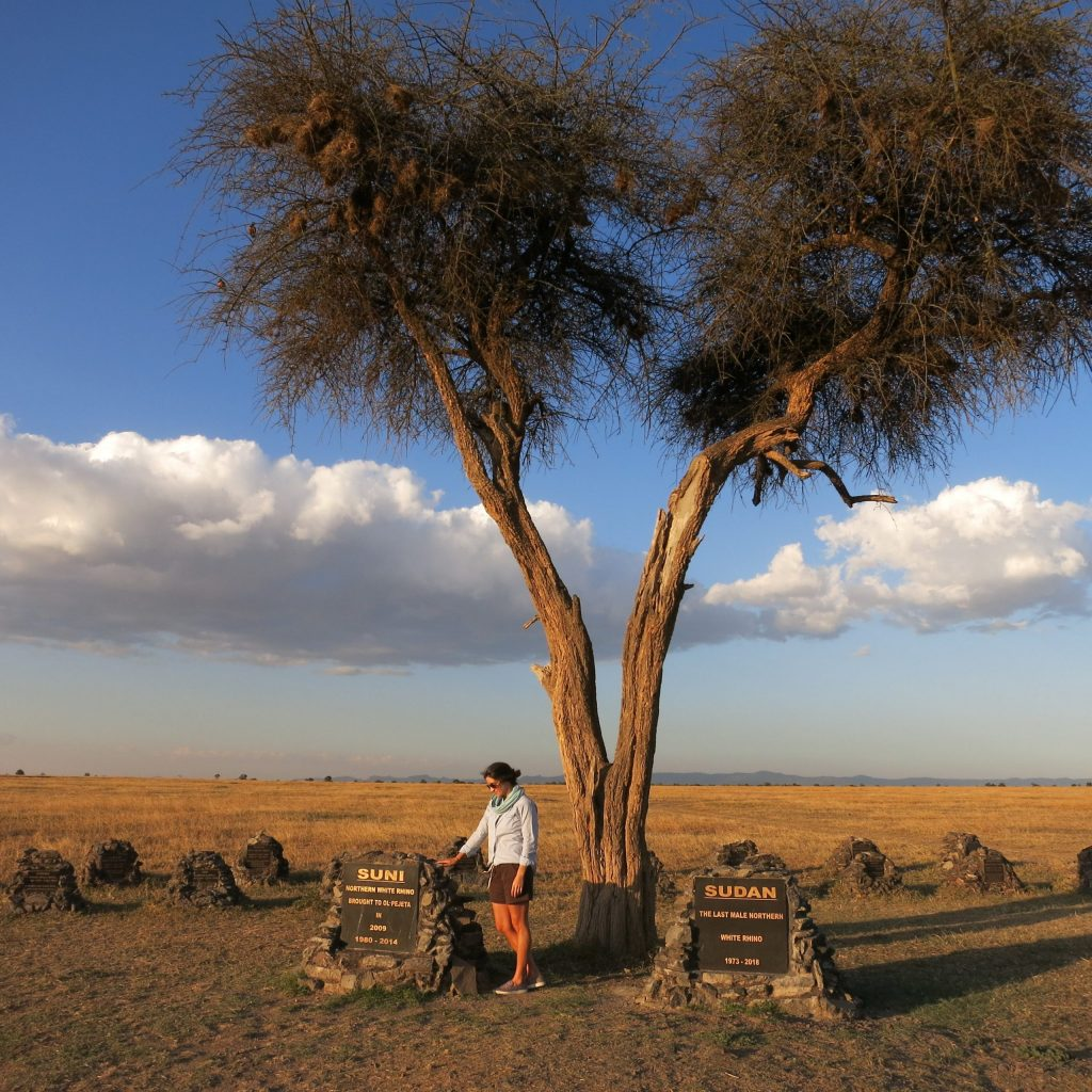 3. Taking a moment to reflect upon Kenya's beloved Northern white rhinos who have recently passed