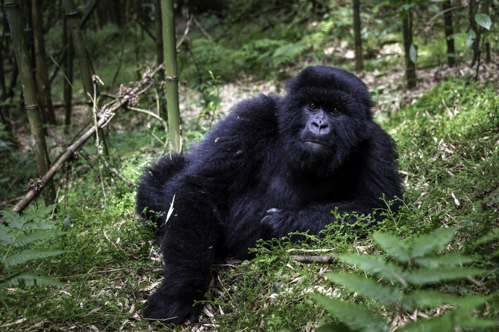 Rwanda-245_BisateLodge_WildernessSafaris_DanaAllen