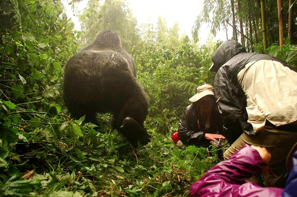 Rwanda Gorilla trek image002