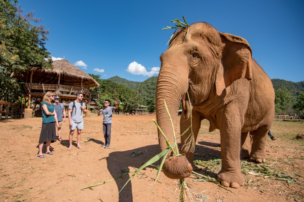 Intrepid Travel- Thailand-chiang-mai-elephants-4159