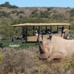 Best Wildlife Experiences with African Travel, Inc. That Go Beyond Your Big Five Bucket List